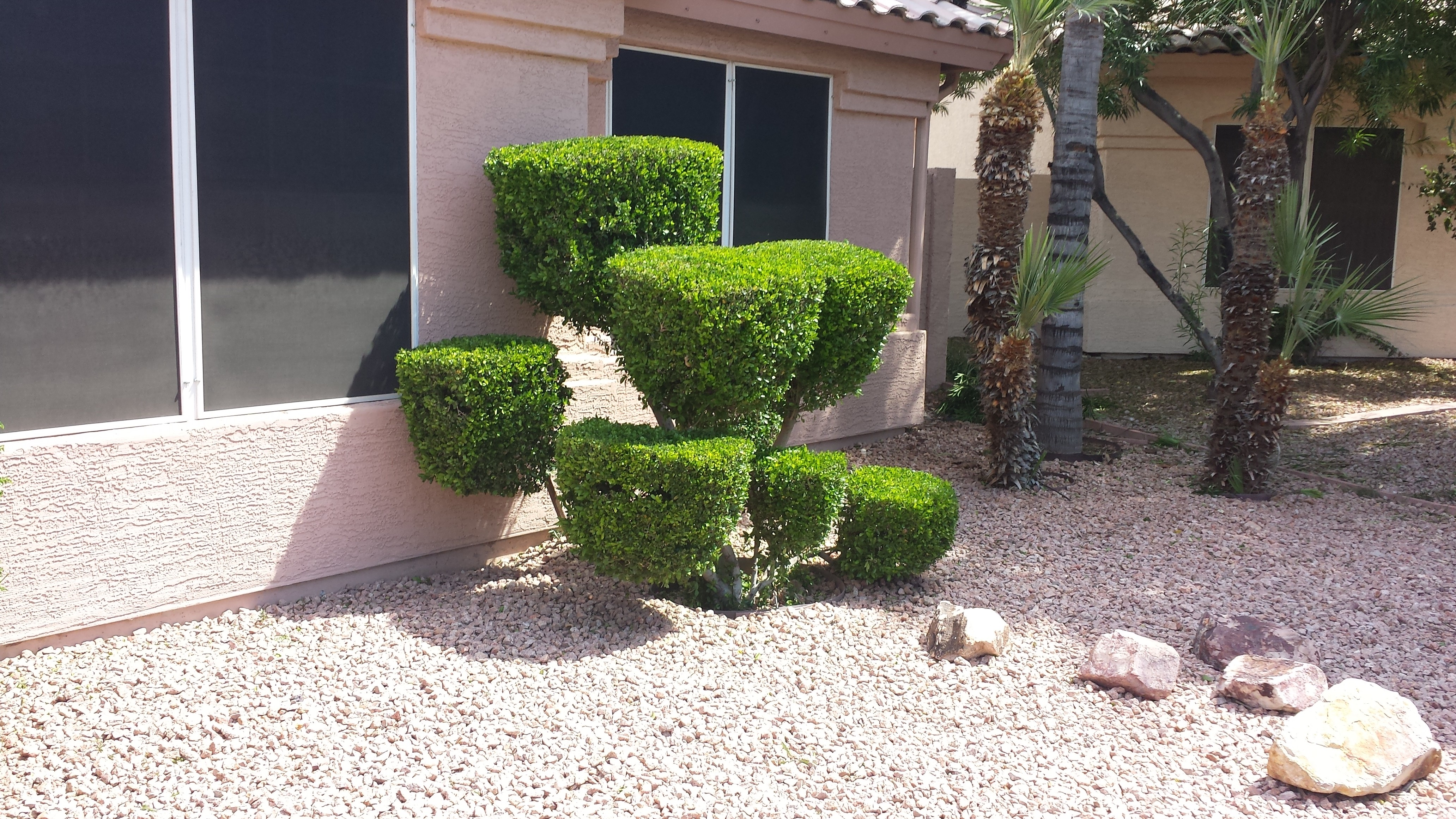 trimmed-hedge
