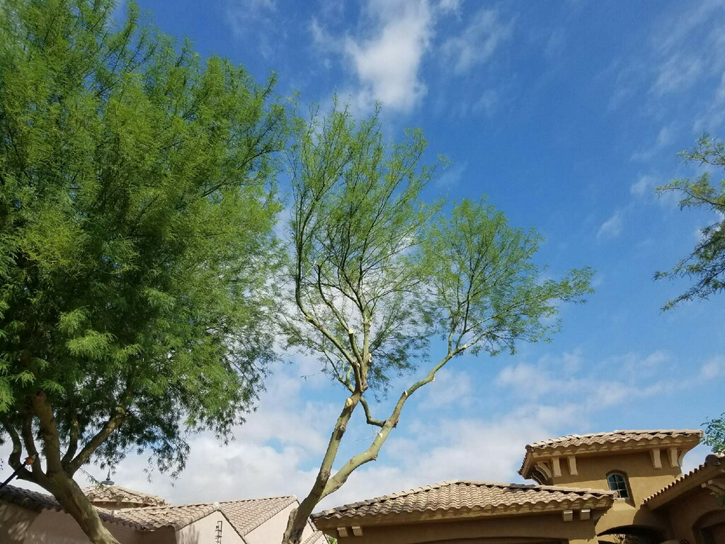tree-trimming-gilbert-az